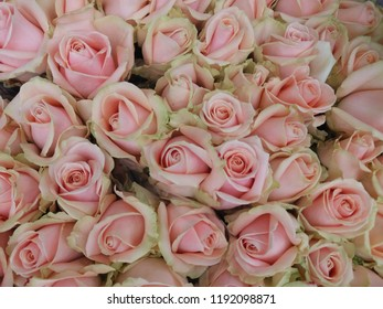 A bunch of roses