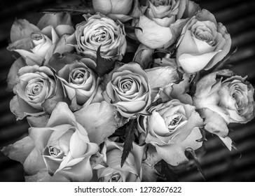 Noir Et Blanc Rose Stock Photos Images Photography Shutterstock