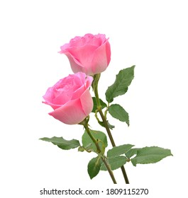 Bunch of rosy roses isolated on white