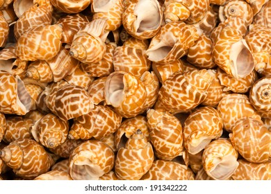 Bunch of see shells