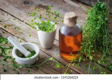 Bunch of shepherds purse, bottle of tincture or potion, mortar of bursa pastoris medicinal herbs.