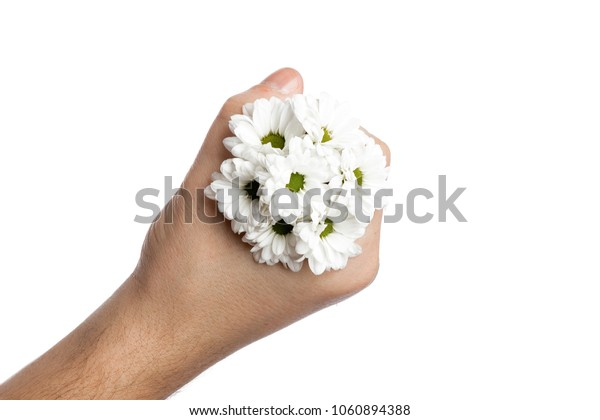 bunch of small chamomiles in a male hand on a white background, isolate. Close-up, view above. Copy space