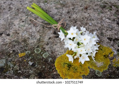 Bunch of spring narcissi flowers tied with twine, lying on a weathered stone bench