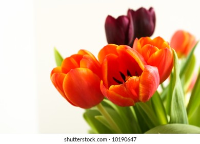 A bunch of Spring Tulip flowers
