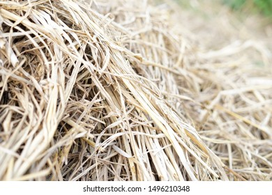 Bunch of straw on rice field background photo