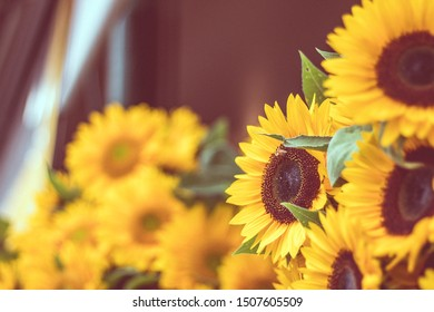 Bunch of sunflowers and a bee