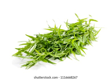 Bunch  of tarragon plant isolated on white