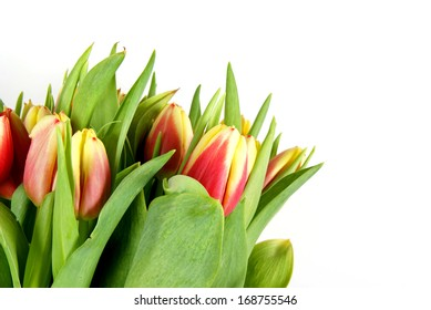 Bunch of Tulips isolated on pure white