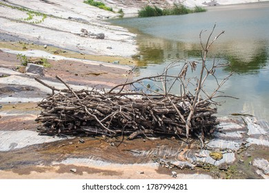 A bunch of twigs gathered togeher beside a river.