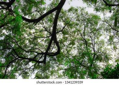 Bunch of variety branches and leaves of threes cover underneath area from sunlight in the bright blue sky. It gave shady enviroment, fresh and relax with botany, wood and plant growth in any season