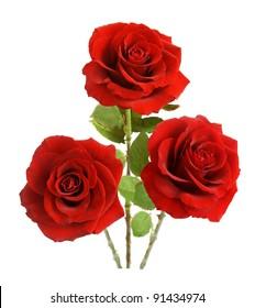 Bunch of velvet red roses isolated on white