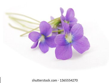 Bunch of viola odorata flowers isolated on white background