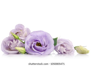 bunch of violet eustoma flowers isolated on white