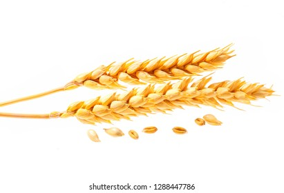 bunch of wheat rye or barley ears with whole grain and leaves yellow wheat rye or barley