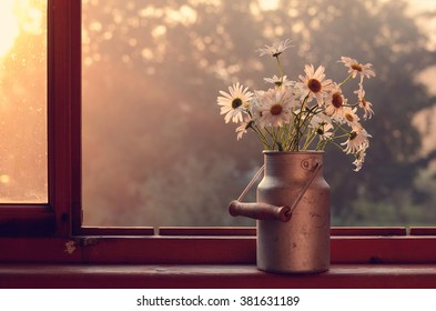 Bunch of white daisies in old churn on wooden window sill in morning sunlights