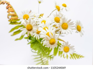 Bunch of white daisies on white background.