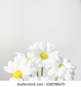 Bunch of White Daisy flowers  on bright  background close up. Spring Daisy flowers wallpaper.