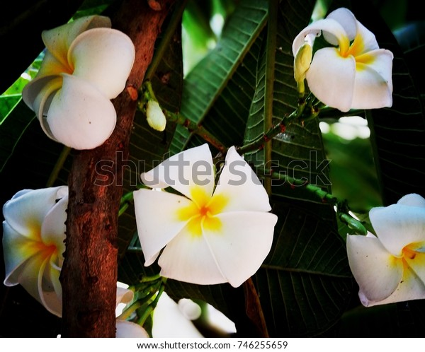 bunch of white flowers with leaf and stem