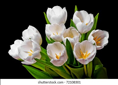 bunch  of white tulips isolated on black