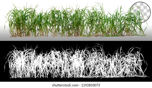 Bunch of wild green grass. Blades of grass. Green tufts isolated on transparent background via an alpha channel. High quality mask without unwanted edge. For professional composition. Tuft of grass.