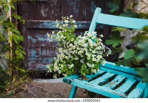 Ein Haufen wilder weißer Blumen, verstreut auf einem Vintage-blauen Stuhl im Garten. Rustikales schönes Bild.