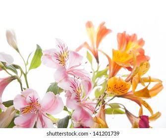 A bunch of wonderful alstroemeria flowers