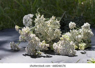 bunch of yarrow on slate with grass in background