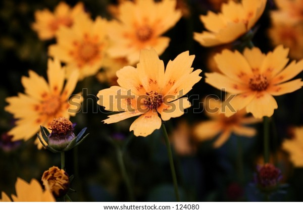 Bunch of Yellow Flowers