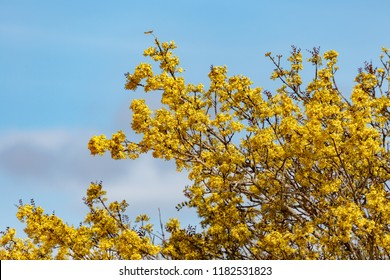 Bunch of yellow flowers growing on a big tree in the field