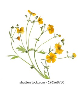 Bunch of yellow flowers, isolated on white background