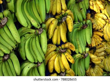 Bunch of yellow and green banana on display for sale
