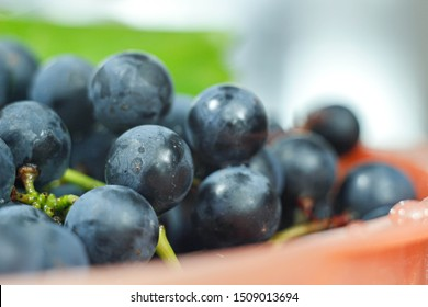 bunches of blue isabella grapes