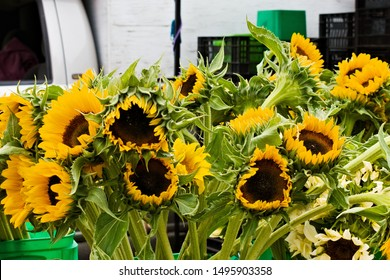 Bunches of decorative sunflowers on sale at local farmer's market.