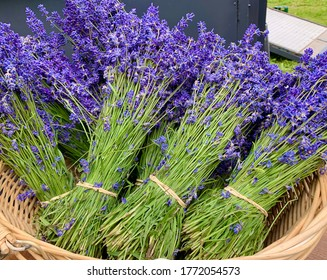 Bunches of fragrant, freshly cut lavender nestled in a basket