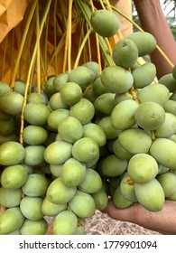 Bunches of fresh dates on palm tree