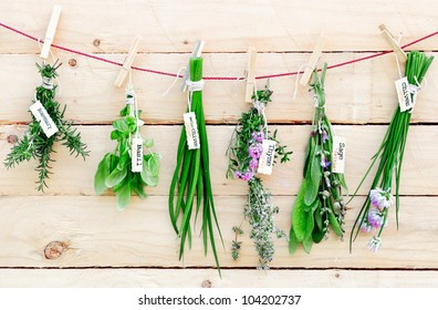 Bunches of fresh herbs with name labels hanging on a line from wooden clothes pegs in a herb gardening concept