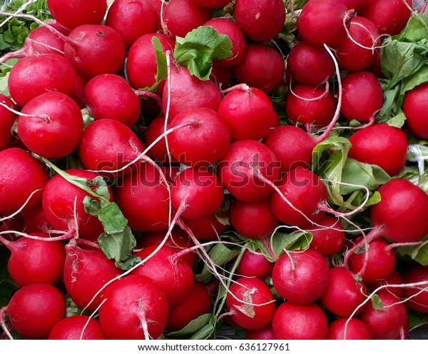 Bunches of fresh red radish on the counter