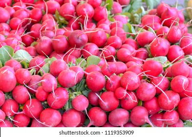 Bunches of fresh red round radish on display at a farmers market for use in a healthy salad in a close up full frame view