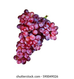 Bunches of fresh ripe red grap on white background with clipping path. Ancient style, a beautiful background with a branch of blue grapes. Red wine grap. dark grap, blue grapes, wine grapes
