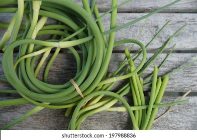 Bunches of freshly picked garlic scape  at the farmers market