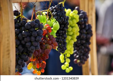 Bunches of grapes of different varieties in the sun. Autumn harvest