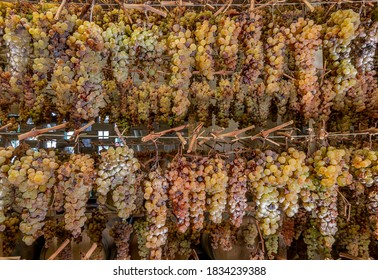 Bunches of grapes are hung in various rows to wither, for the production of the famous vin santo, Tuscany, Italy