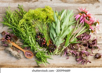 bunches of healing herbs and coneflowers on wooden plank, top view, herbal medicine