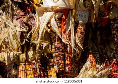 Bunches of Indian Corn rubber banded together