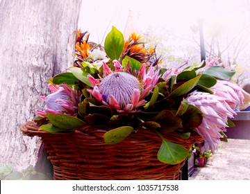 Bunches of Proteas in Madeira island Festlval Flowers. Portugal.