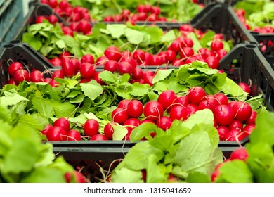 bunches of red radish wiht green leaves in baskets in the market