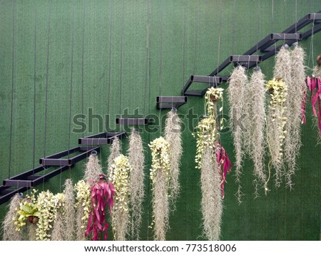 bunches red rhipsalis spanish moss dave hanging stock photo edit
