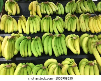 bunches of ripe and unripe bananas are displayed in supermaket.