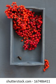 bunches of rowan on a gray background
