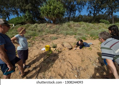 Bundaberg, Queensland/Australia-January 7 2018: A researcher answering questions asked by tourists while collection data from a nesting female Loggerhead Turtle at Mon Repos.